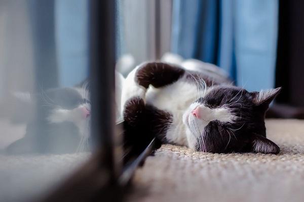 muurisolatie genieten kat