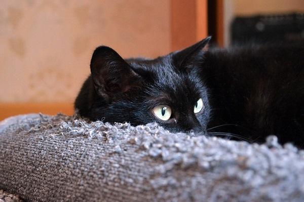 warme kat isolatie